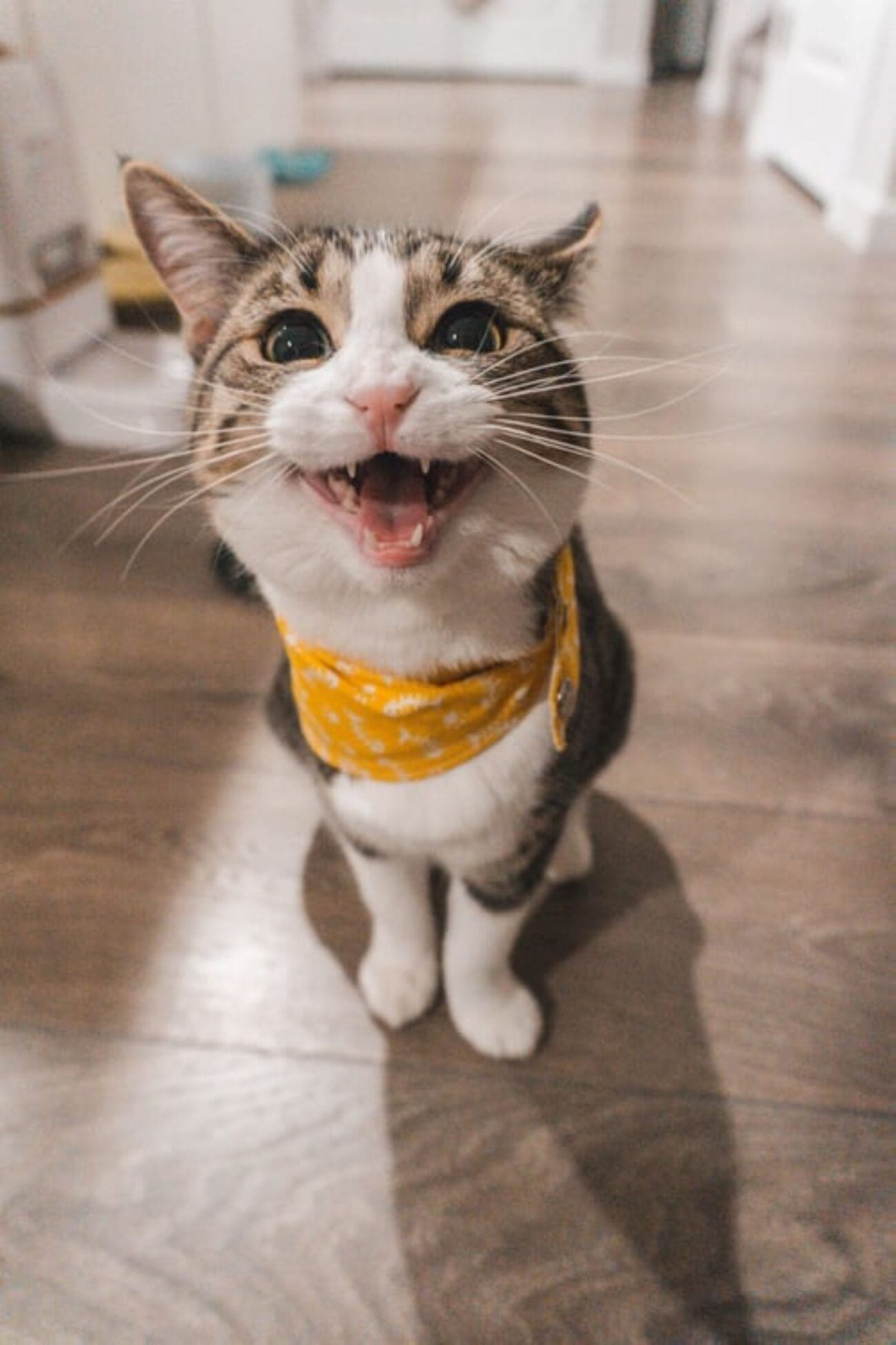 if you're like us, you might have been disappointed when there wasn't a Met Gala this year. Here are some equally stylish yet funny cat pictures to help.