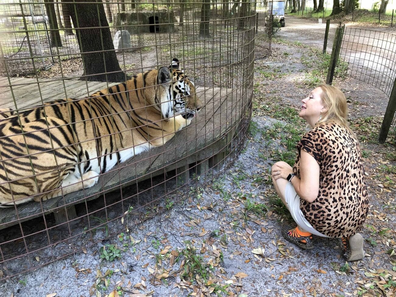 Carole Baskin and BCR are finally getting their goal: Joe Exotic's zoo. Here's everything you need to know about the court ruling.