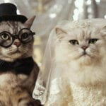 Looking for a good meme about marriage? We've compiled all the best (and weirdest) memes on the subject the internet has to offer.