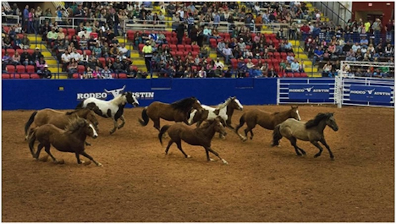 Struggling to find a good live stream to watch the Texas cowboy rodeo finals? Here's how you can watch the NFR live.