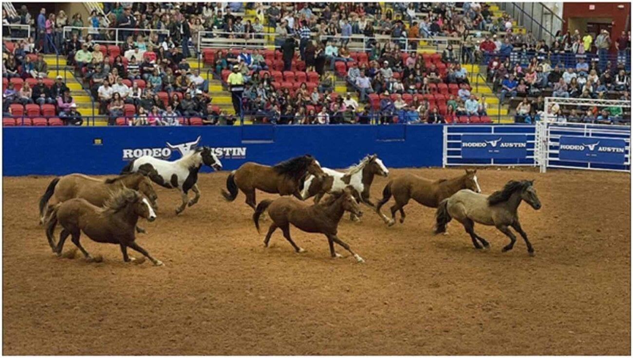 The Wrangler NFR is a 10-day event which is one of the best Rodeo competition around the globe. Here's how you can watch Reddit live streams.
