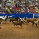 A complete guide to watch Texas NFR (National Finals Rodeo) Live Stream Online 2020 Reddit Texas Free Cowboy Christmas: Schedule of Events, Timings, Dates, Results and Updates.