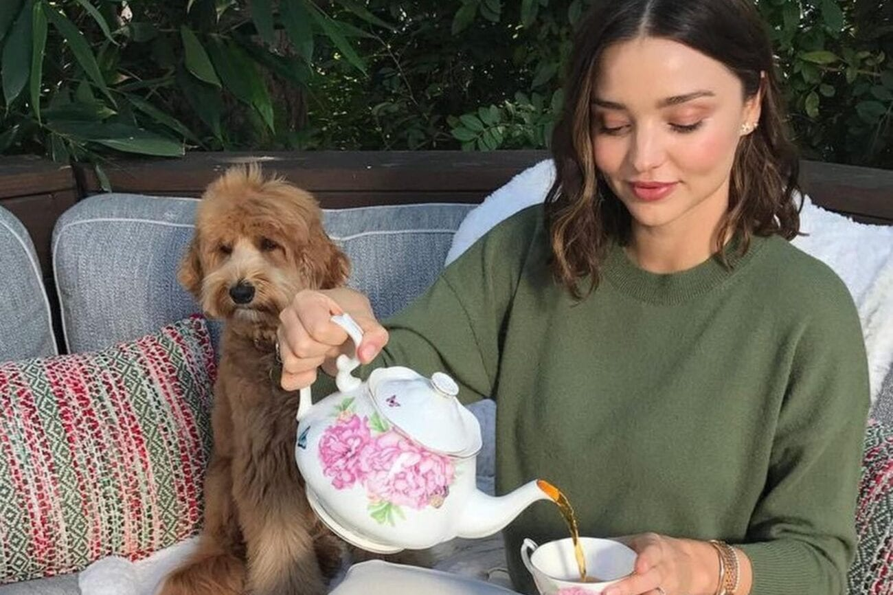 Celebrities love dogs just like the rest of us. Here's a list of the celebrities who happen to love their yorkies.