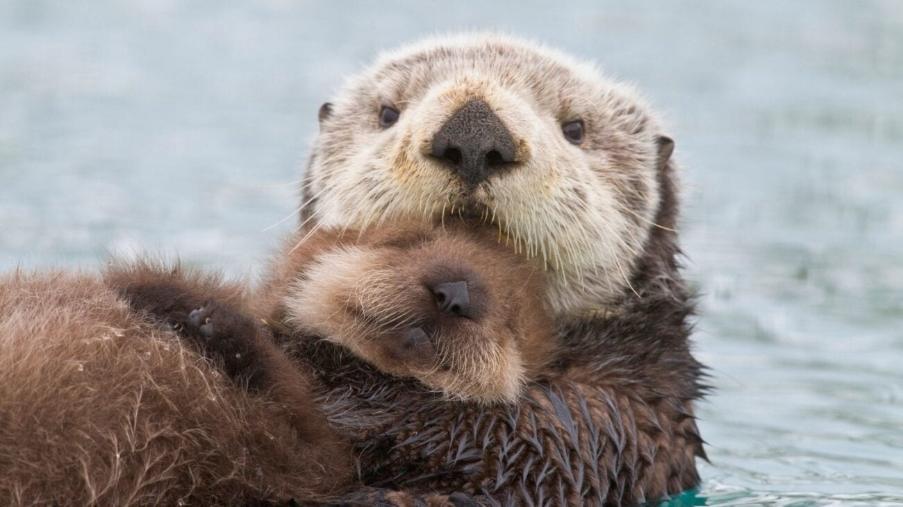 Feeling low during lockdown? Do you need some eye bleach? Check out these cute animal videos that are guaranteed to make you feel warm and fuzzy.