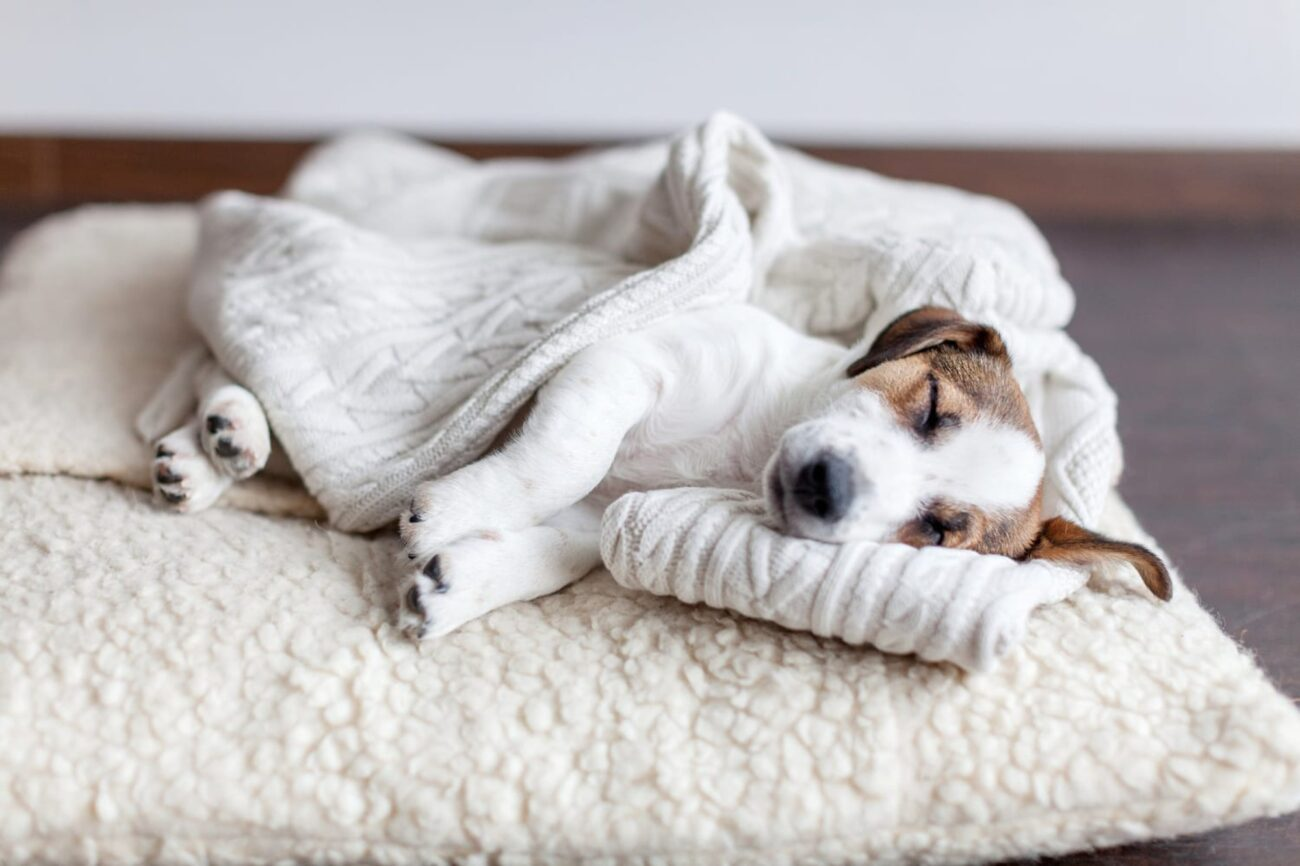Pet beds are crucial to your cat or dog getting a good night's sleep. Discover which pet beds are most comfortable here.