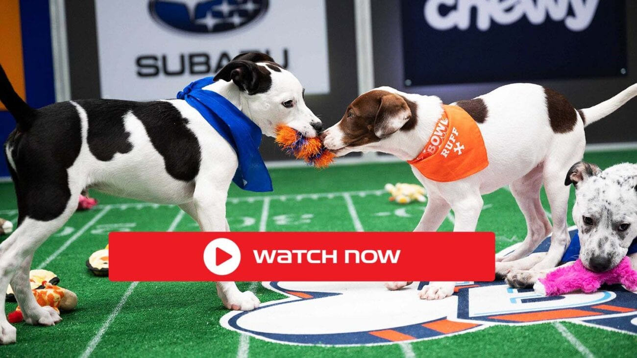 It's time for the Puppy Bowl. Discover how to live stream the exciting pet event online for free.