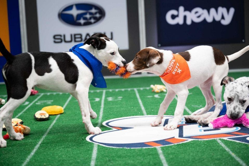 Best ways to Watch Puppy Bowl Live Stream 2021 online. Animal Planet Puppy Bowl XVII start time, TV Channel, lineup and free reddit streaming info.