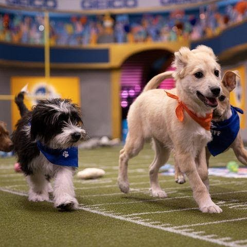 It's Super Bowl Sunday and it's also the biggest day in canine athletics: the Puppy Bowl. Find out how to watch the event live.